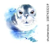 watercolor hand drawn monk seal ... | Shutterstock . vector #1087433219