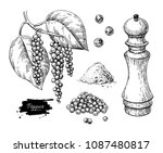 black pepper vector drawing set.... | Shutterstock .eps vector #1087480817