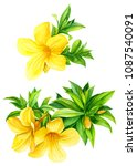 yellow tropical flowers on... | Shutterstock . vector #1087540091