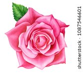 beautiful pink rose  flowers on ... | Shutterstock . vector #1087546601