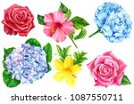 flowers on isolated white... | Shutterstock . vector #1087550711