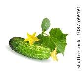 fresh  nutritious  tasty green... | Shutterstock .eps vector #1087599491