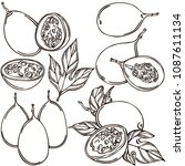 passion fruit linear pattern ... | Shutterstock .eps vector #1087611134