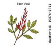 bitter wood  quassia amara  or... | Shutterstock .eps vector #1087649711