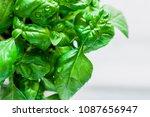 fresh organic basil on marble... | Shutterstock . vector #1087656947