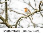 closeup of a garden robin... | Shutterstock . vector #1087673621