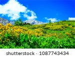 mountain meadow flowers... | Shutterstock . vector #1087743434
