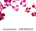 set of pink orchids on white... | Shutterstock . vector #1087801025