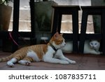 a white brown cat laying in... | Shutterstock . vector #1087835711