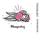 mangosteen exotical thailand... | Shutterstock .eps vector #1087840361