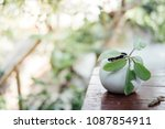 small plant in a pot displayed... | Shutterstock . vector #1087854911