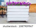 purple petunia flowers in the...   Shutterstock . vector #1087909967
