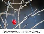fishing bobber entangled in the ... | Shutterstock . vector #1087973987