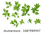 citrus leaves on white... | Shutterstock . vector #1087989947