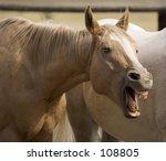 Humerous Horse