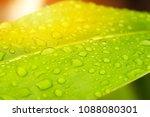rain drops on the green leaf... | Shutterstock . vector #1088080301