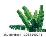 tropical banana palm leaves... | Shutterstock . vector #1088140241