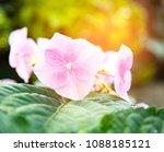 empty chair in beautiful garden | Shutterstock . vector #1088185121