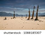 Dead Trees In A Dried Up Lake...