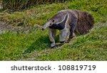 giant anteater | Shutterstock . vector #108819719