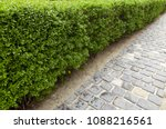 green hedge from the bushes... | Shutterstock . vector #1088216561