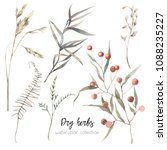 watercolor dry herbs set. hand... | Shutterstock . vector #1088235227
