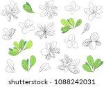 leaves illustration. botanical... | Shutterstock .eps vector #1088242031