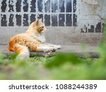 Small photo of Dirty homeless redhead cat house wall. The problem of stray animals