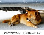 Small photo of Dog avoid hot sun light by dodge under parking car