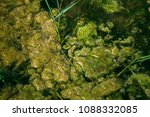 swamp algae. green algae... | Shutterstock . vector #1088332085