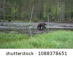 pond with brown bears  in... | Shutterstock . vector #1088378651
