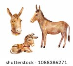 cute little donkey lying and... | Shutterstock . vector #1088386271