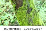 Green Moss And Leaves In The...