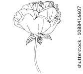 wildflower peony flower in a... | Shutterstock .eps vector #1088416607