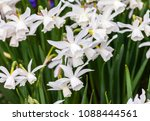 field of blooming white...   Shutterstock . vector #1088444561