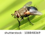 closeup of fly on emergent... | Shutterstock . vector #108848369