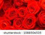 red roses are gathered in a... | Shutterstock . vector #1088506535