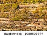 wooden texture of a rotten tree ... | Shutterstock . vector #1088509949