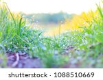 trail in green grass with dew   ... | Shutterstock . vector #1088510669