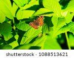 butterfly in the green leaf  ... | Shutterstock . vector #1088513621