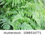 green fern leaves  | Shutterstock . vector #1088516771