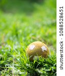 Small photo of Old ball in the grass