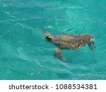 turtle breathing at the surface | Shutterstock . vector #1088534381