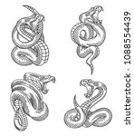 Viper Snake Set. Hand Drawn...