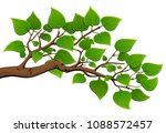 branch of a tree with green... | Shutterstock .eps vector #1088572457