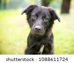 a furry black mixed breed puppy ... | Shutterstock . vector #1088611724