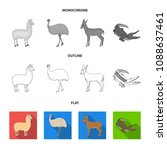 lama  ostrich emu  young... | Shutterstock .eps vector #1088637461