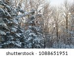forest trees covered with... | Shutterstock . vector #1088651951