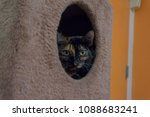 tortoiseshell colored cat in a... | Shutterstock . vector #1088683241