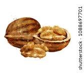 walnut on white background.... | Shutterstock . vector #1088697701